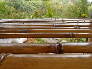 Bamboo panels drying after being treated.